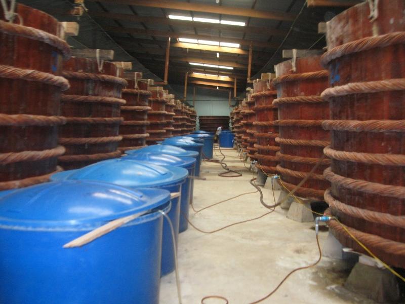 Một cơ sở sản xuất nước mắm Phú Quốc