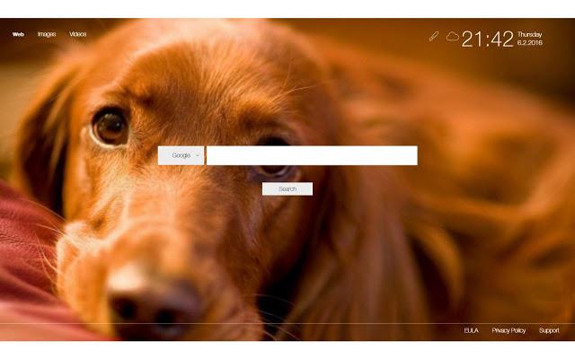 Tiện ích mở rộng Dog Wallpaper New Tab