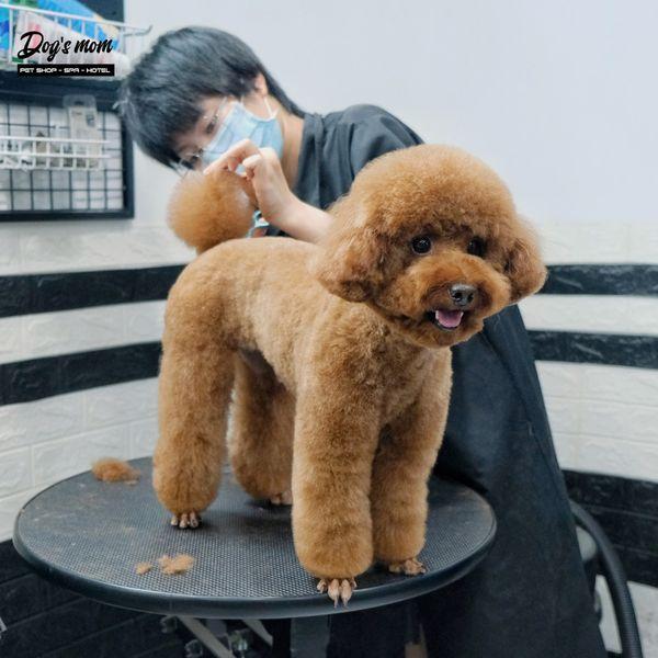 Dogs Mom Pet Spa