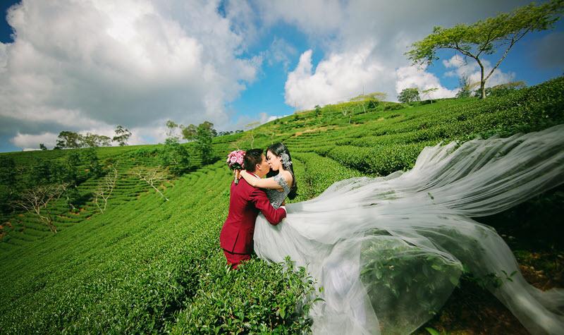 Ảnh cưới tại đồi chè Cầu Đất Đà Lạt