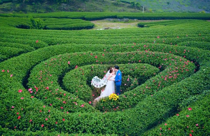 Cặp đôi uyên ương đang đắm mình trong đồi chè hình trái tim đầy lãng mạn