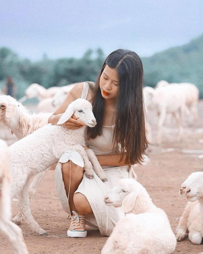 Đồi Cừu dưới chân núi Bà Đen