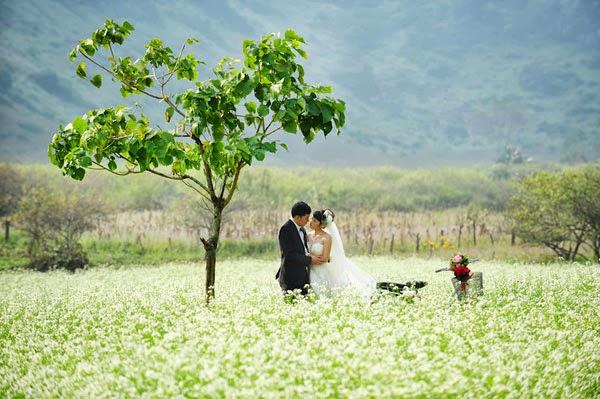 Đồi hoa cải trắng  - nơi mang đến cho bạn những bức ảnh tuyệt vời nhất