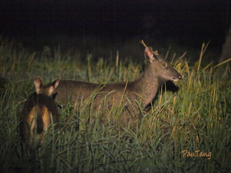 Động vật hoang dã ở vườn Quốc gia Nam Cát Tiên