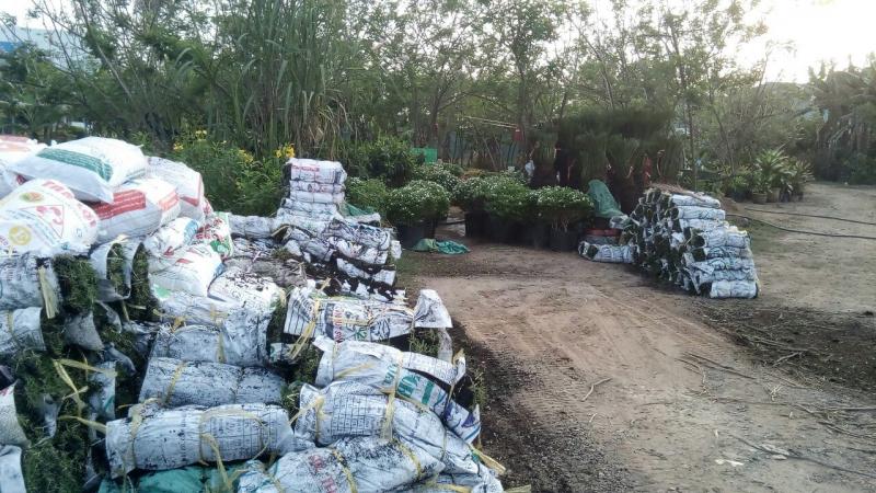 Đồng Thành Công JSC - Cung cấp cây xanh và vật tư nông nghiệp phía Nam