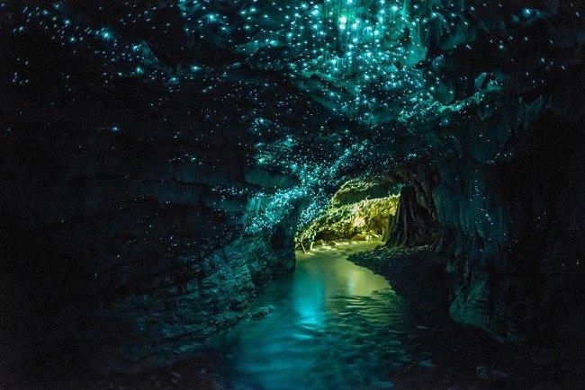 Động trùng sáng Waitomo, New Zealand