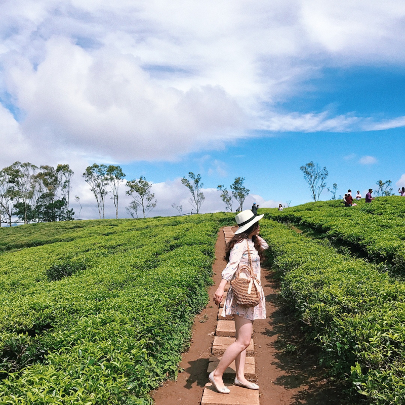 Cau Dat Farm, also known as Cau Dat Tea Hill, has been a very famous place since 2016 until now.