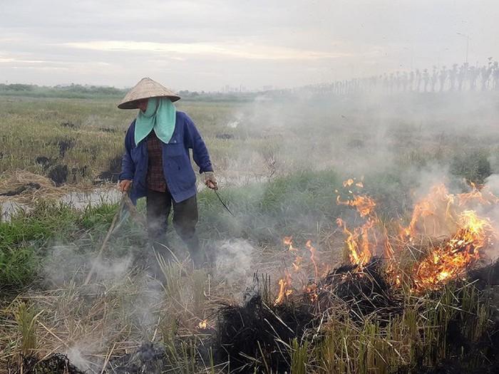 Đốt rơm rạ đã trở thành thói quen khó bo của người nông dân