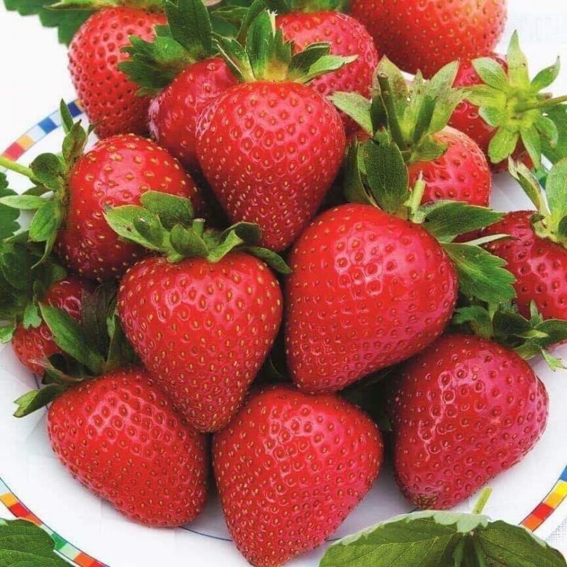 DP Fruits Thái Nguyên