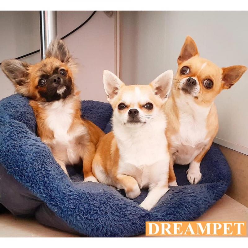 Dreampet