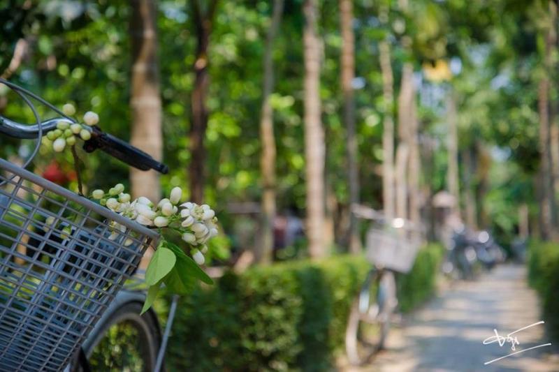 Đặc biệt, đạp xe dạo quanh làng và dừng chân ghé thăm các làng nghề làm rượu gạo, làm hương trầm hay làng nghề làm giấy vàng mã.