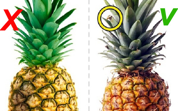 Nếu trái dứa có màu vàng tươi từ cuống cho đến phần cuối hoặc vài chỗ hơi xanh thì trái đã chín, ngọt