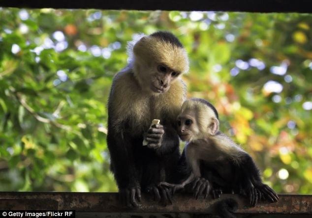 Marina - cô gái được bầy khỉ nuôi