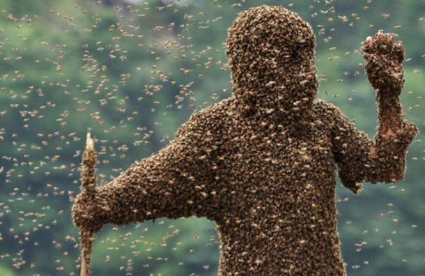 Dùng ong để tấn công