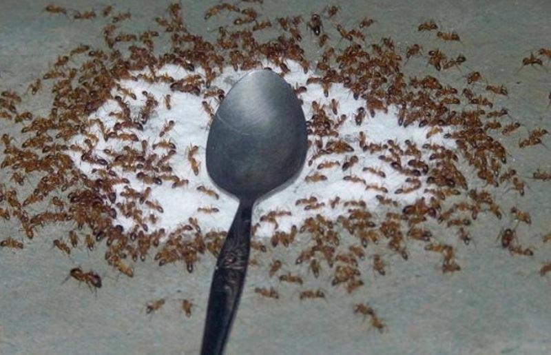 Đuổi côn trùng
