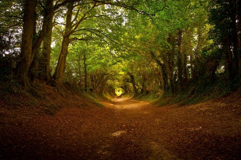 Vào mùa thu, rừng cây chuyển màu càng thêm rực rỡ