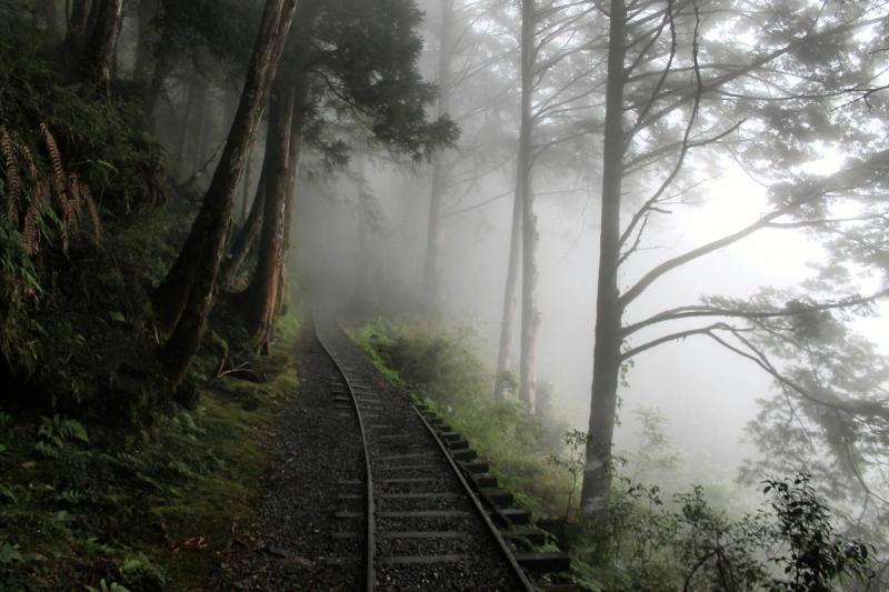 Con đường bao phủ bởi sương sớm