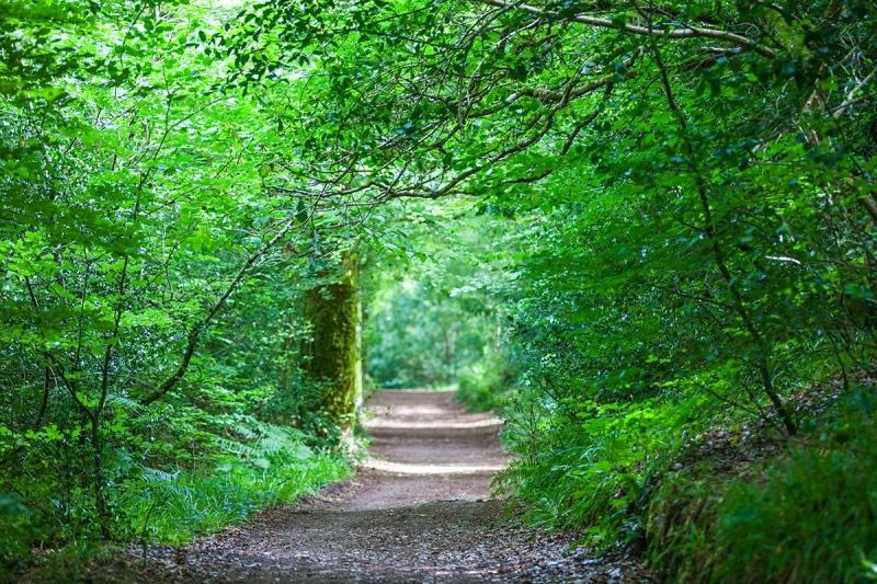 Những mùa khác trong năm, hàng cây đỗ quyên xah mướt ngập tràn ánh nắng