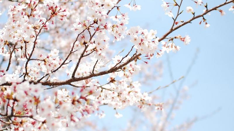 Sắc hoa hồng phấn tạo nên cảm giác dễ chịu