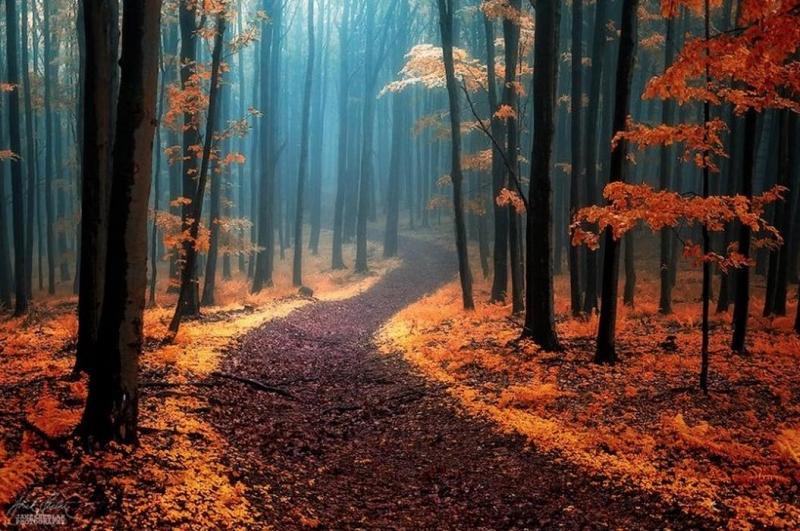 Con đường trải đầy lá vàng quyến rũ
