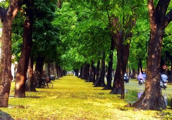 Đường Phan Đình Phùng