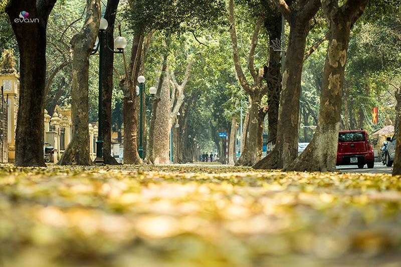 Đường Phan Đình Phùng với vẻ đẹp đầy mộng mơ