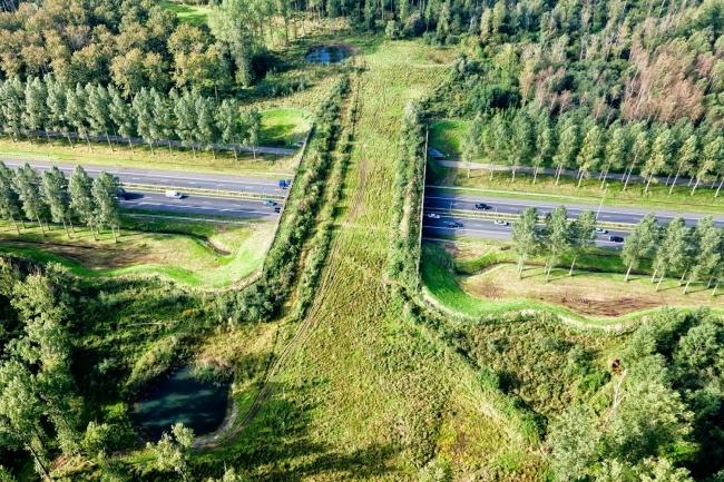 Đường rừng cắt ngang quốc lộ dành cho động vật hoang dã