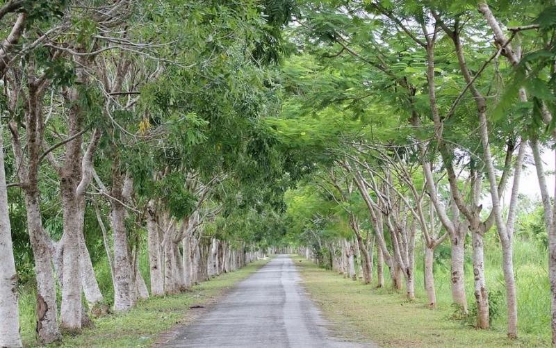 Đường vào rừng U Minh Thượng