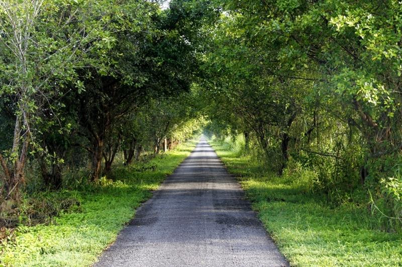 Hai hàng cây xanh mát ven đường