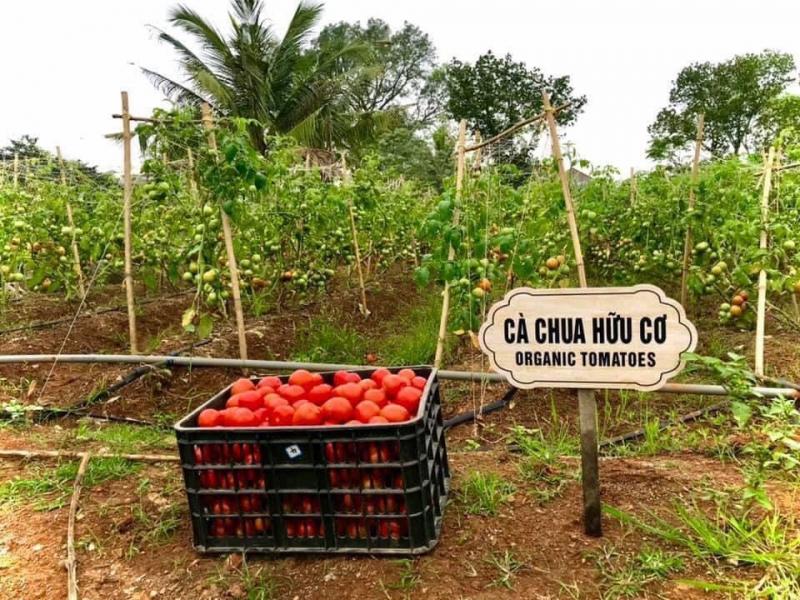 Thực phẩm hữu cơ của Eco Refill Văn Quán