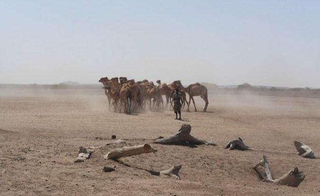 Số người thiệt mạng/năm vì biến đổi khí hậu ở Ethiopia là 100.000 người