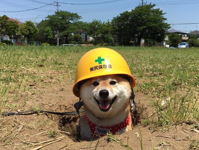 Công nhân phiên bán cún con