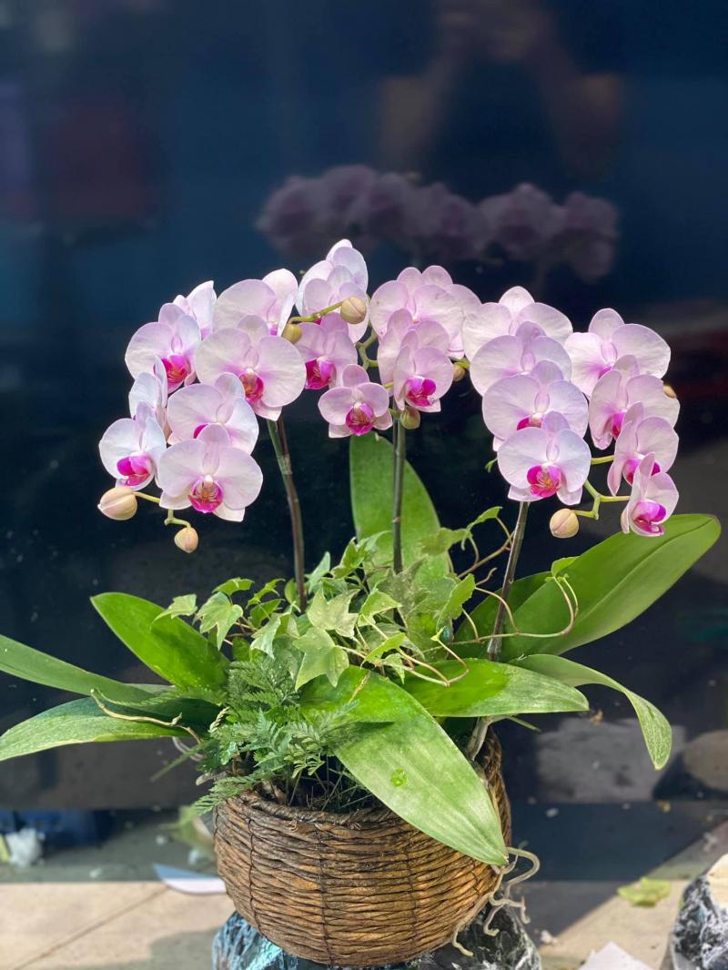 Feeling Love Flowers