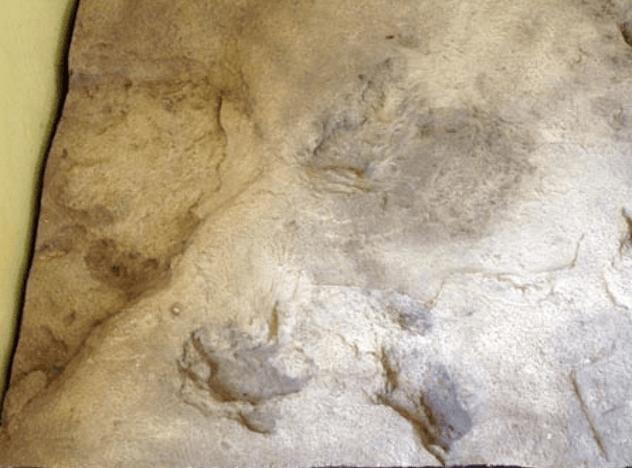 Footprints Of Eve