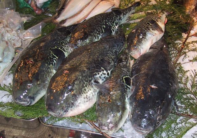 Món cá nóc được người Nhật ưa chuộng