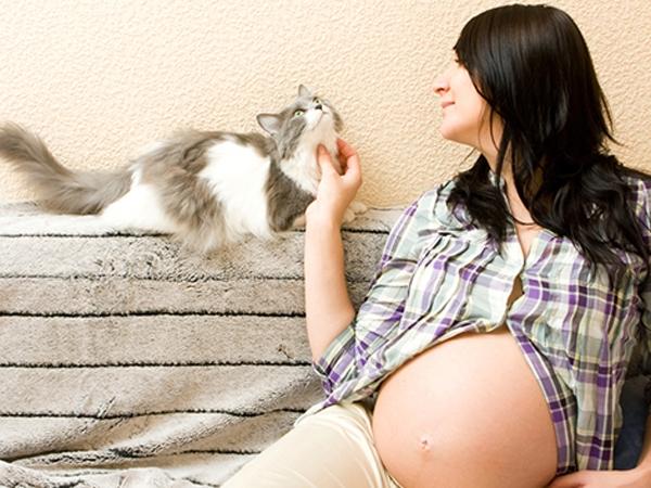 Mèo là thú cưng của nhiều người nhưng khi mang bầu nên tránh xa