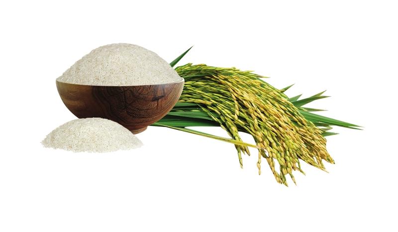 Gạo đặc sản Gia Hưng