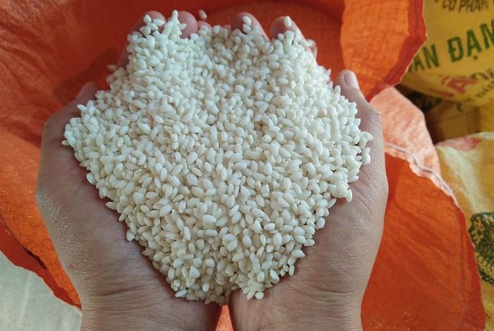 Gạo nếp cái hoa vàng Kinh Môn
