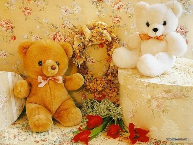 Gấu bông - Anh muốn che chở cho em suốt đời