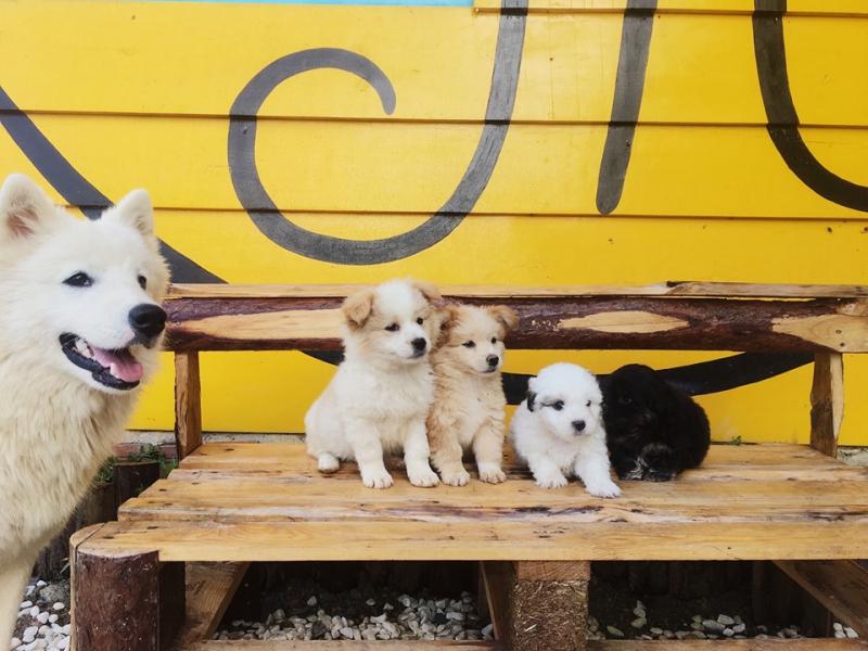 Bạn sẽ được gặp rất nhiều chú cún đáng yêu