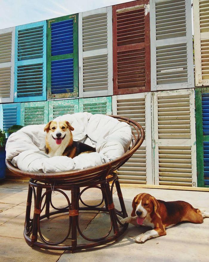Những chú chó thân thiện tại Gâu