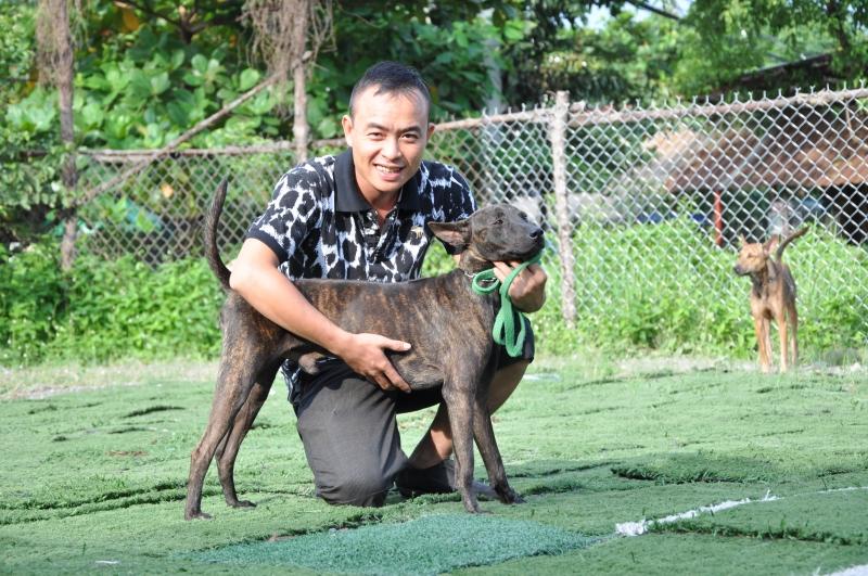 Nên mua chó Phú Quốc ở các trại uy tín để tránh mua phải chó lai, không thuần chủng