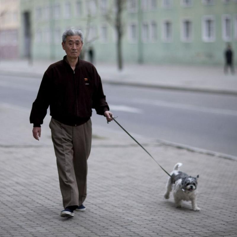 Chó giúp bạn an tâm hơn khi ra đường