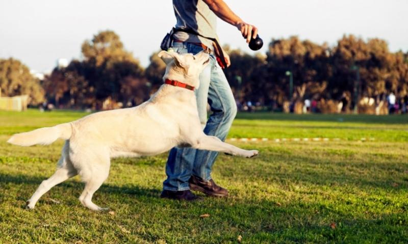 Chó giúp tránh các bệnh về tim mạch