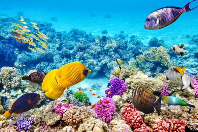 Great Barrier Reef  (Úc)