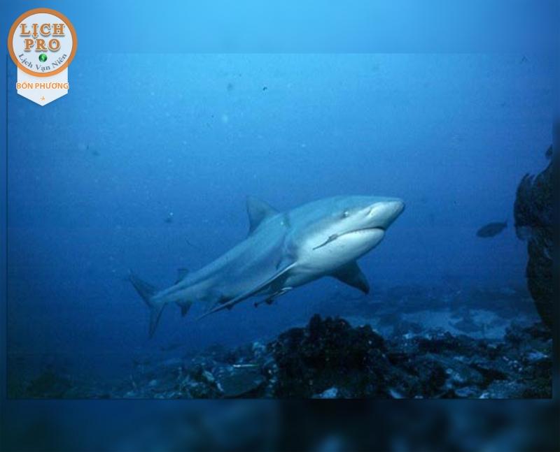 Ở đây mọi người sẽ có cơ hội gặp những loài cá quí hiếm như cá mú, cá mập San hô Caribe