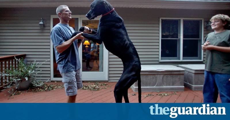 Chú chó Great Dane Zeus nổi tiếng