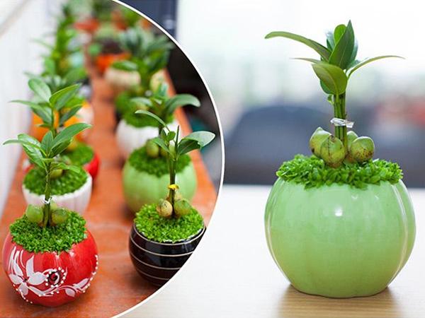 Green Homes Việt Nam đảm bảo rằng sẽ giúp cho quý khách hàng sẽ thật sự hài lòng về dịch vụ của Green Homes Việt Nam.