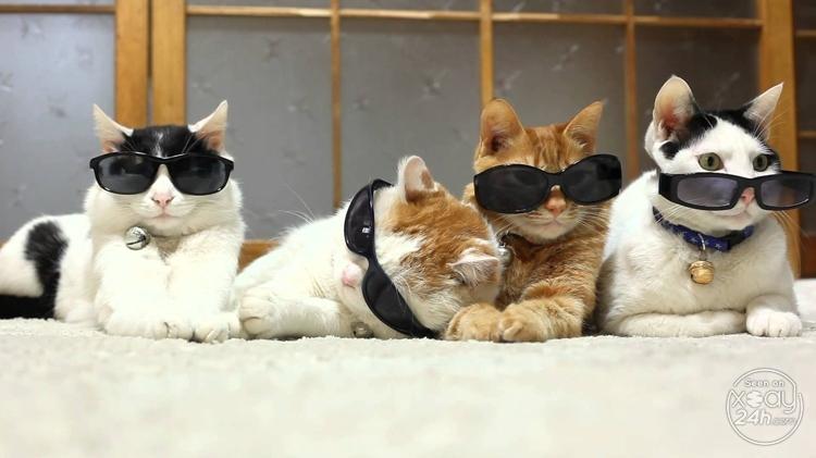 Băng đảng mafia mèo