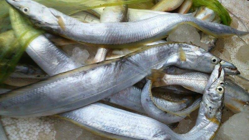 Cá cùi, kho khô rất tốn cơm.